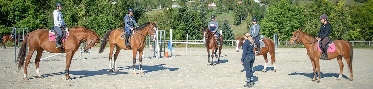 Enseignant d'équitation (BPJEPS)